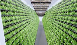 Indoor-Farming / MABEWO AG Schweiz